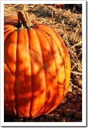 655903_pumpkin